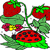 Strawberry garden coloring