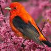 Colourful Birds Puzzle