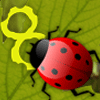 This Ladybug is Hungry for numbers. Solve the equation, find out the correct number and feed that number to ladybug. If she eats the wrong number, she will die.