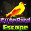 Cute Bird Escape