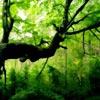 Green Forest Hidden Alphabet