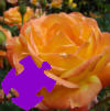 Autumn Rose Jigsaw A Free Jigsaw Game