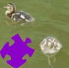 Baby Ducks Jigsaw A Free Jigsaw Game