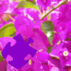 Play Bougainvillea Jigsaw