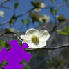 Dogwood Jigsaw A Free Jigsaw Game