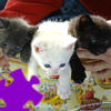 Cute Kittens Jigsaw A Free Jigsaw Game