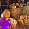 Play Pumpkins Jigsaw
