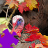 Play Turkey Jigsaw